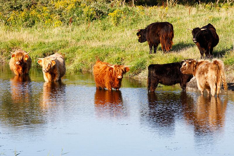 National Park Lauwersmeer